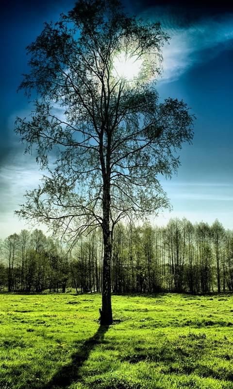 Calm Nature