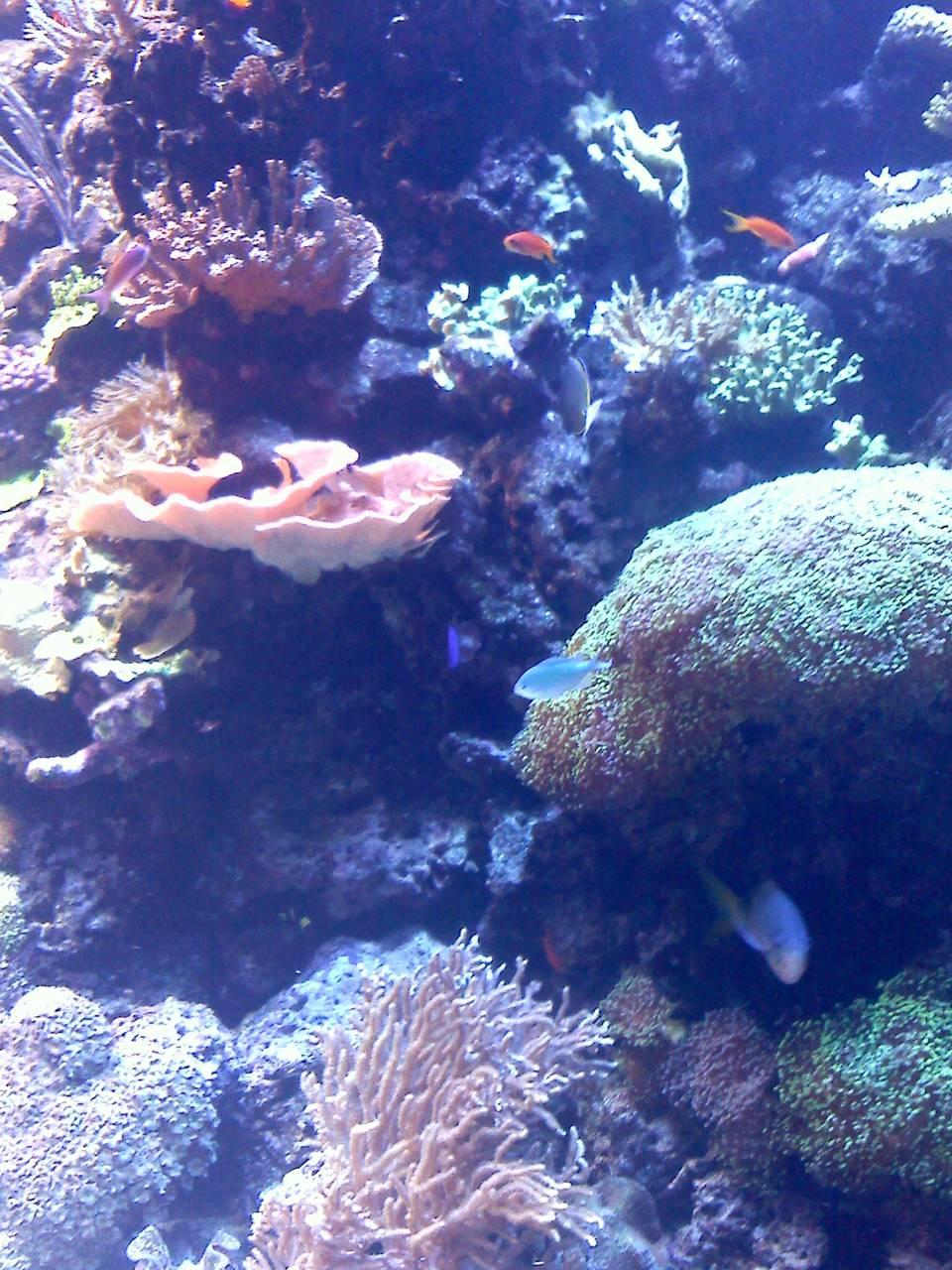 Houston Aquarium