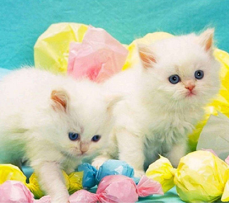 Easter Kitten