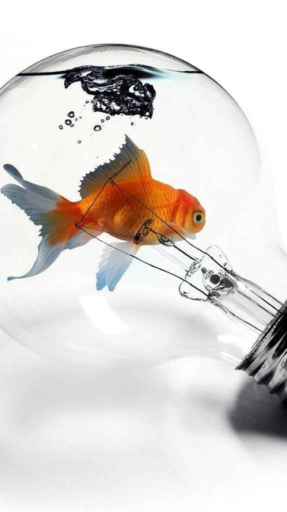 Fish In A Light Bulb
