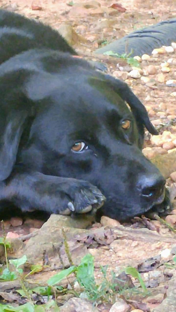 Blake dog