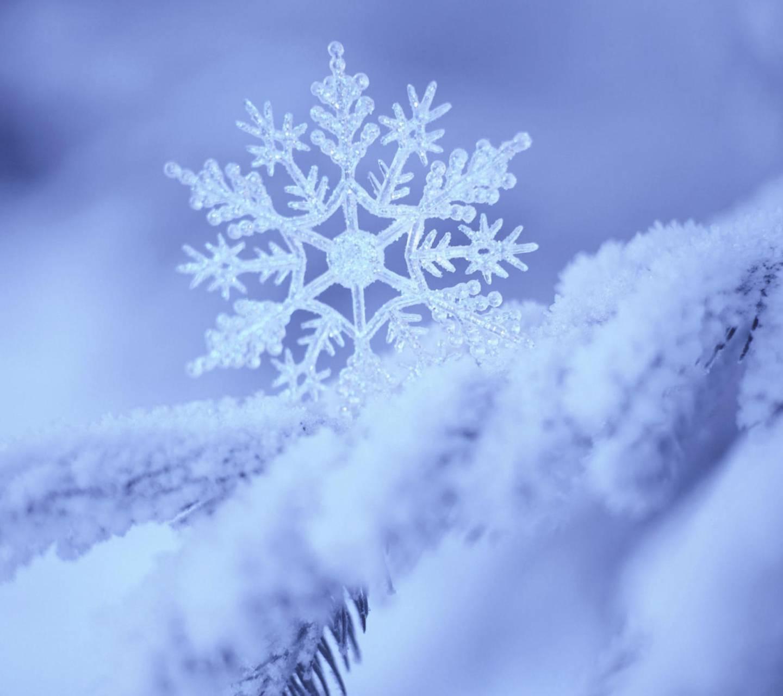 Snowy Filigree