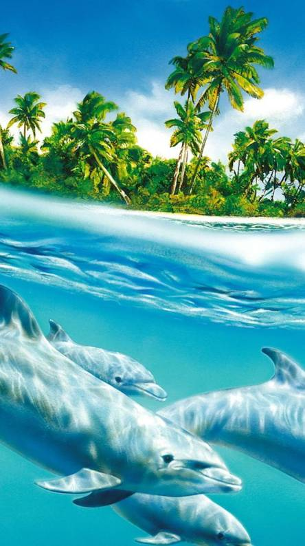 Dolphin wallpapers. Dolphins In Sea