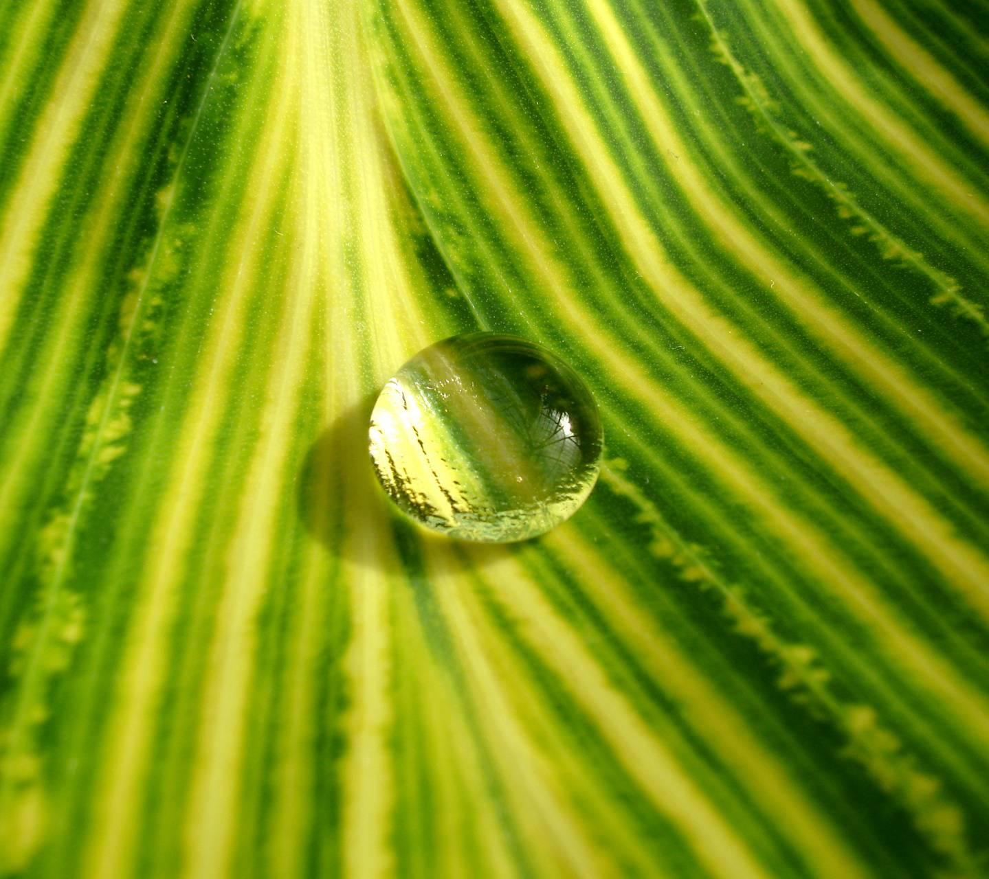 Water Drop 5