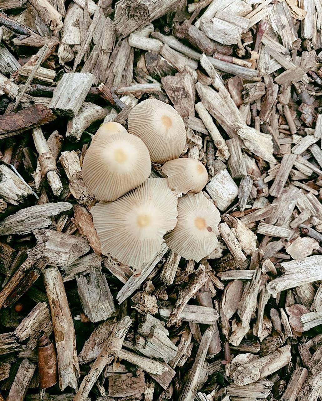 Mushroom Expedition