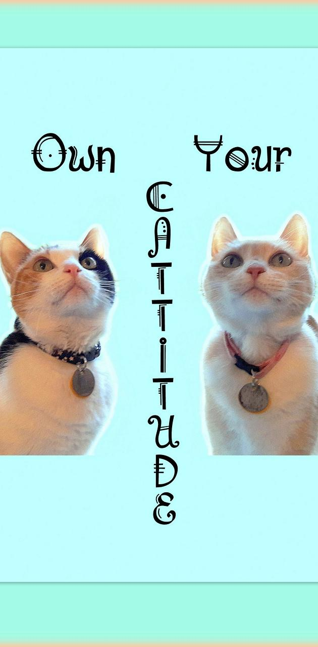 Own Cattitude Cats