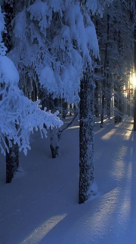 Sun Beams Winter