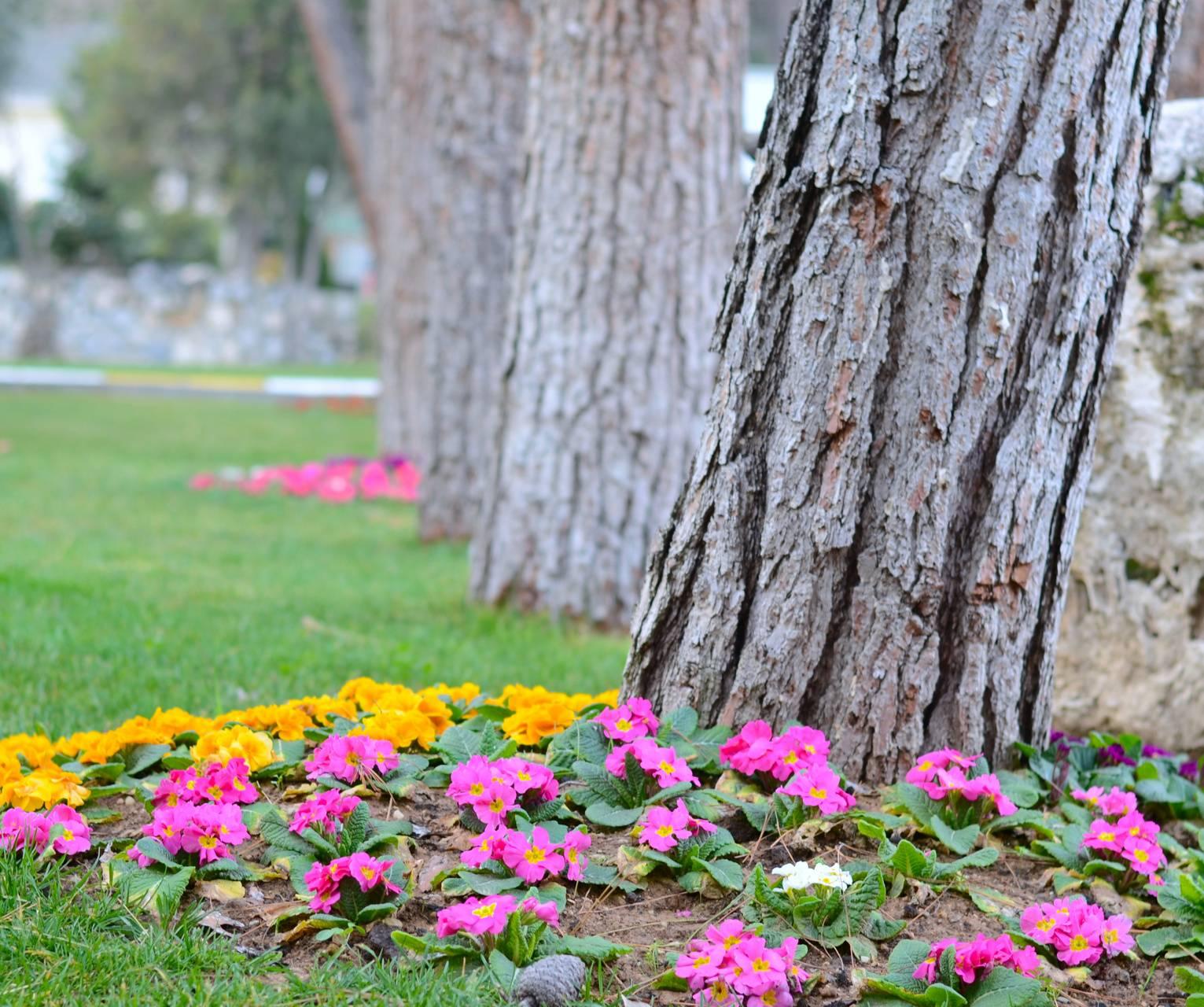stone tree flower