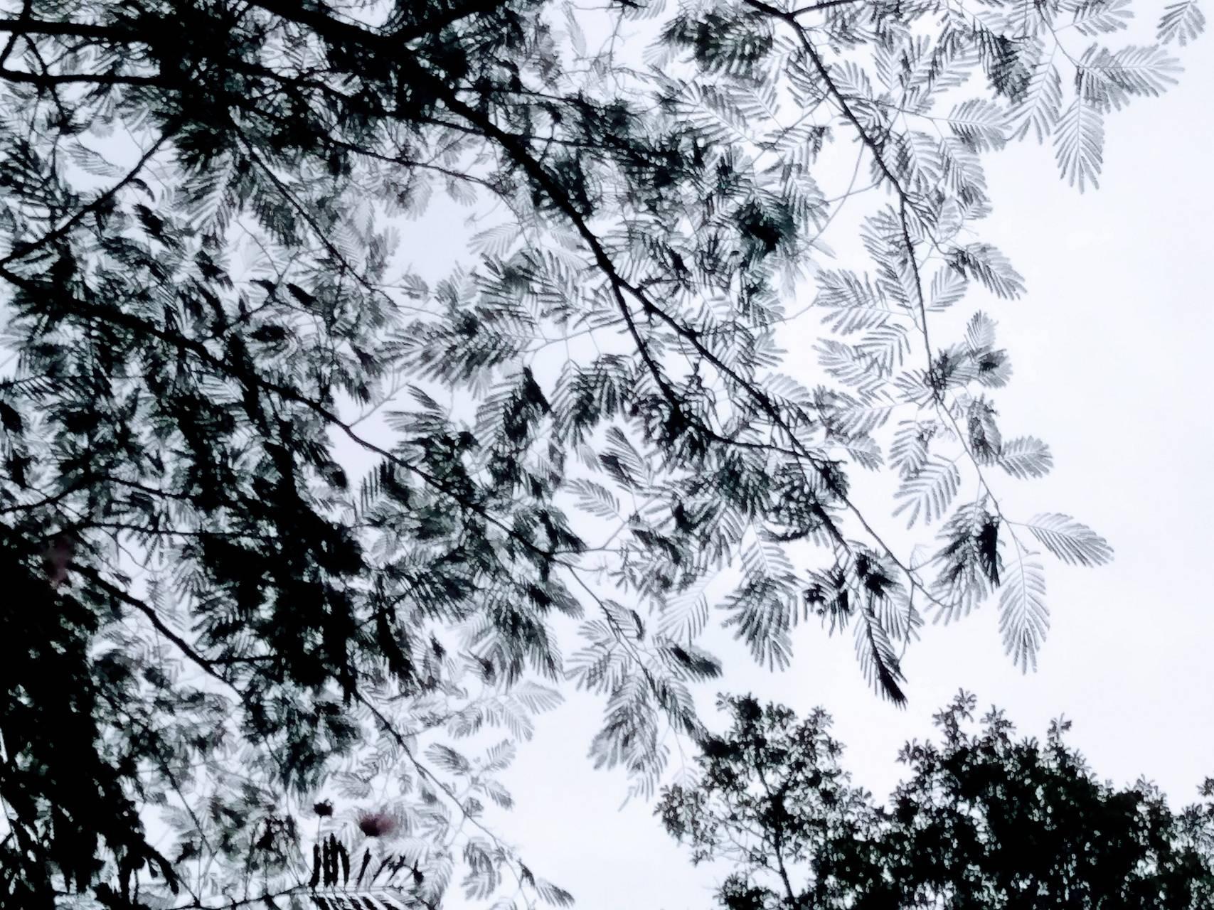 Trippy leaves