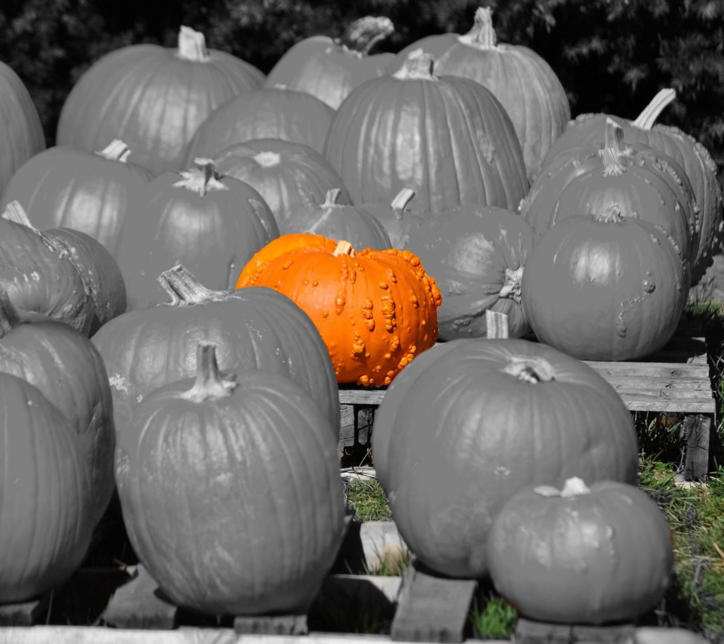 Warty Pumpkin