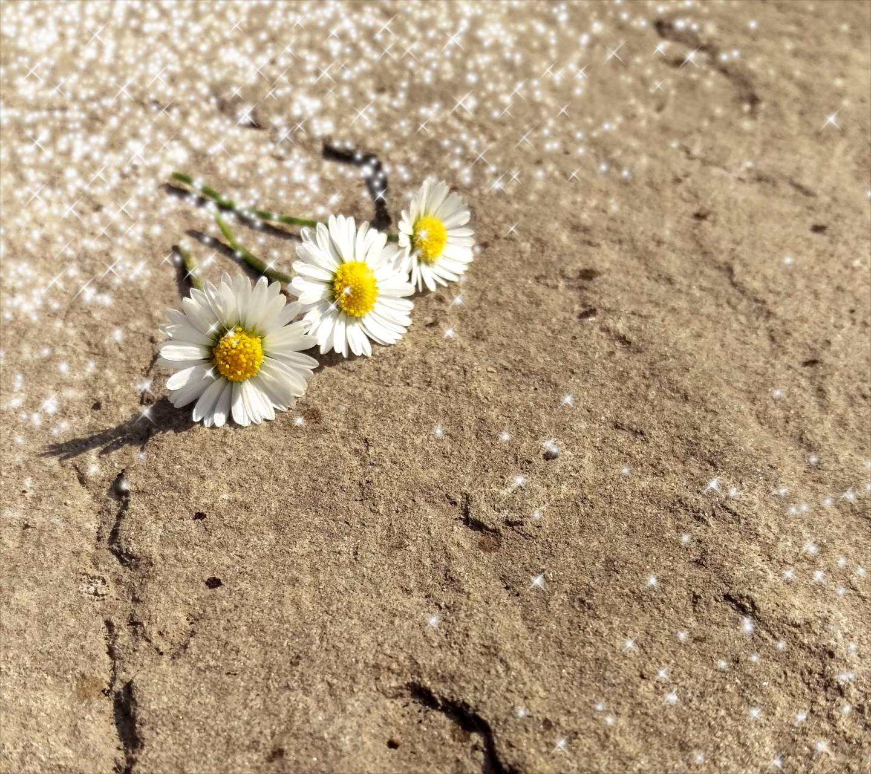 little flower2