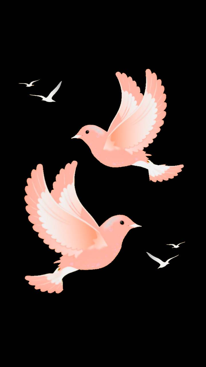 Pink Doves