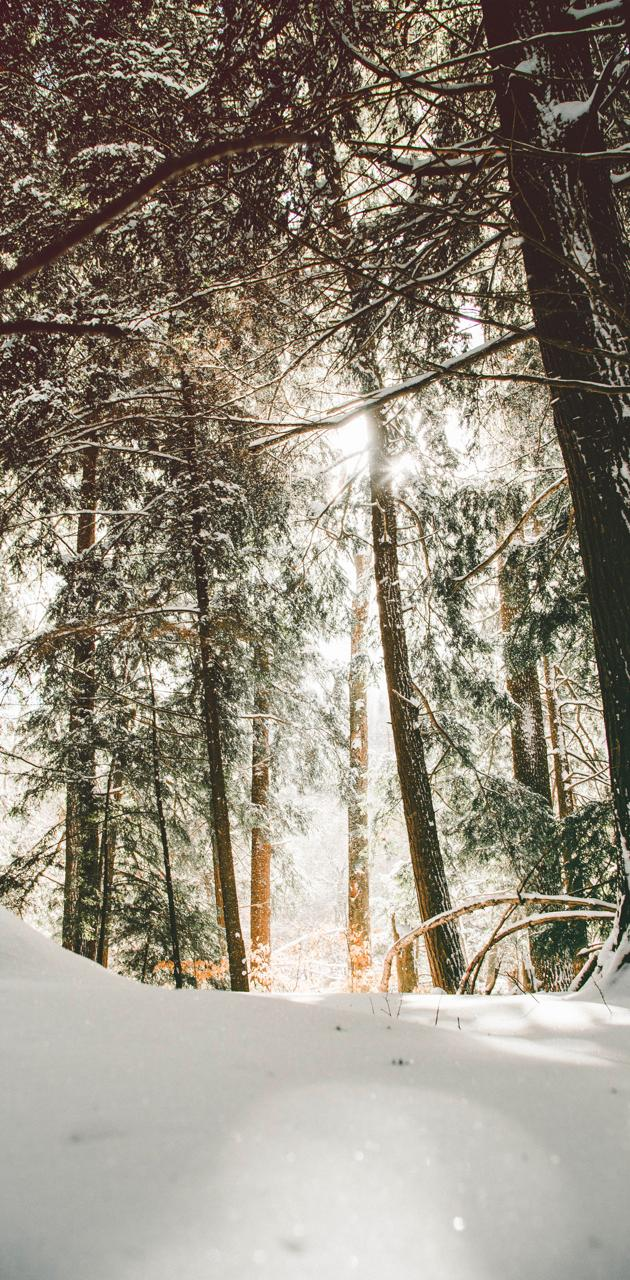 Brilliant Snow