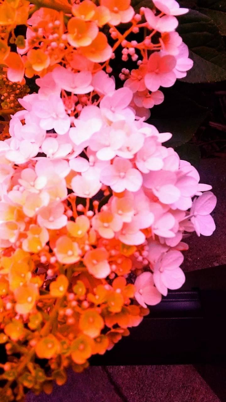 The shaggy flower
