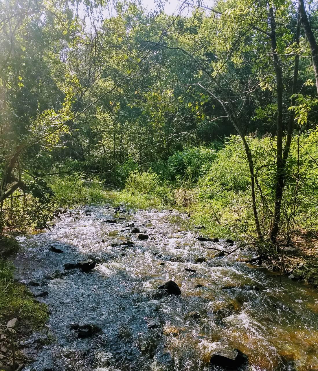 Mid summer brook