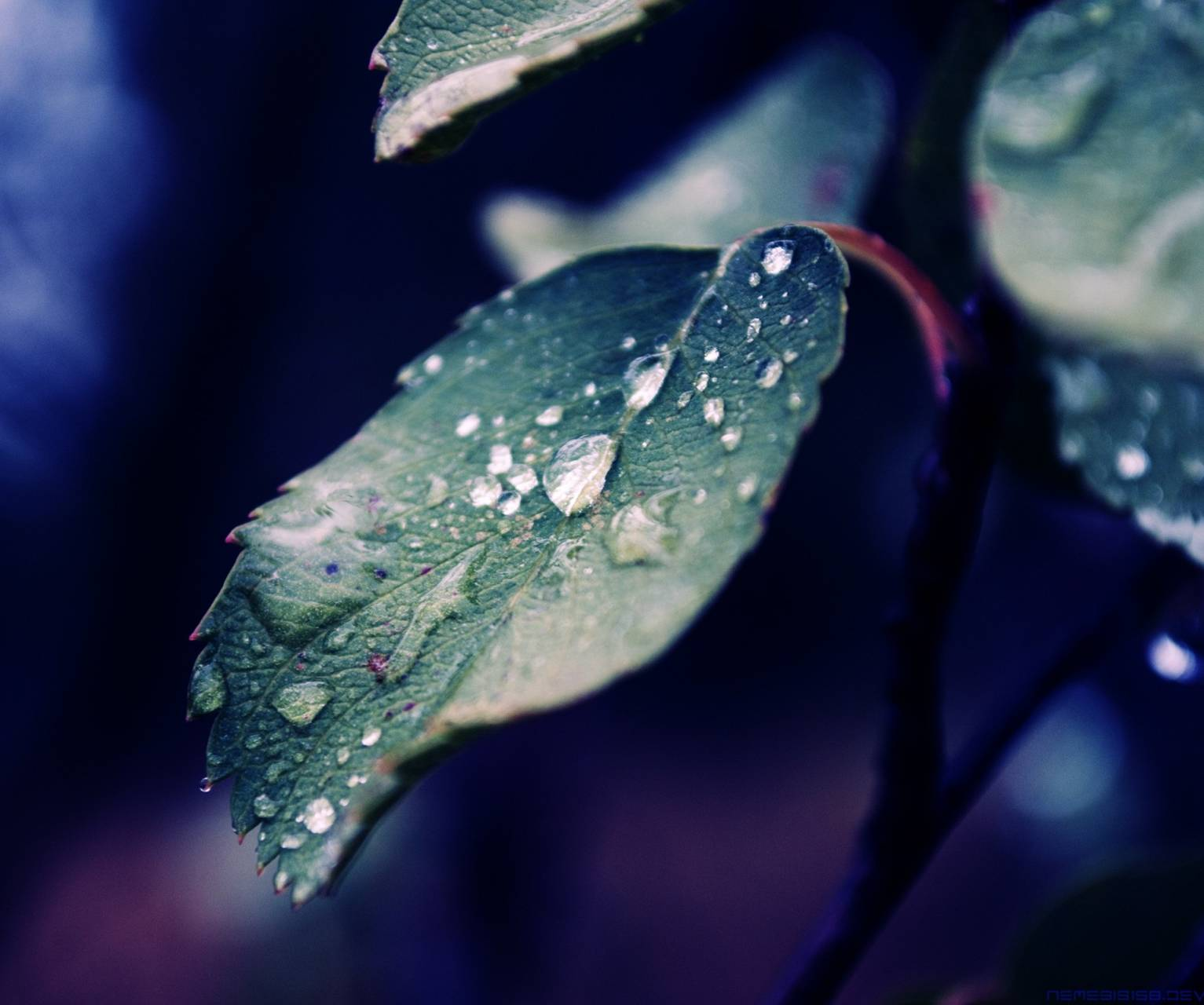 Fall rain of nature