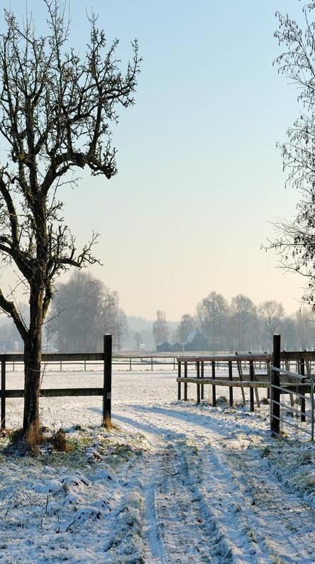 Snow field