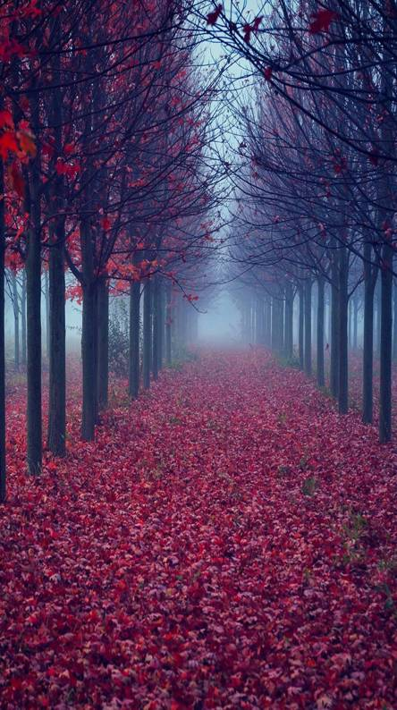 Red leaves road