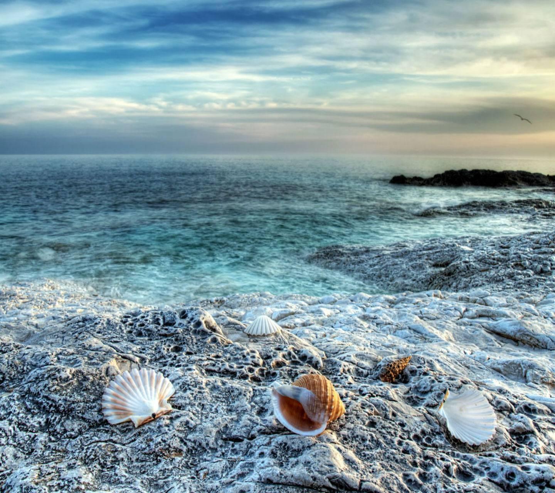 Sea Shells HD