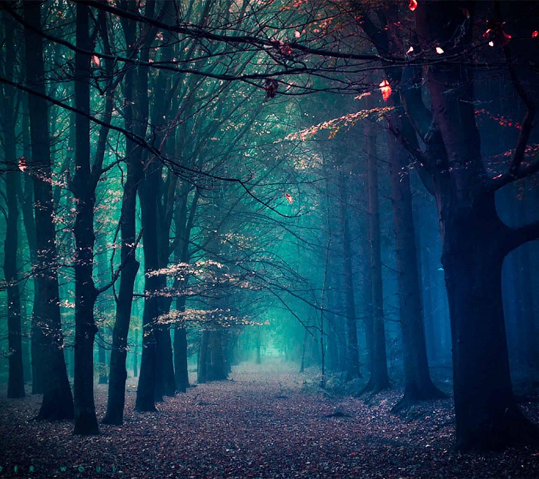 Forest fantastic