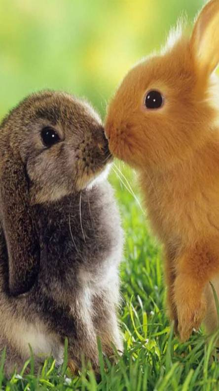Cute Rabbits