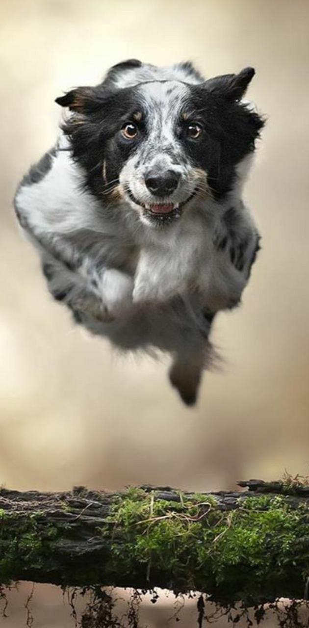 Dog Fastest
