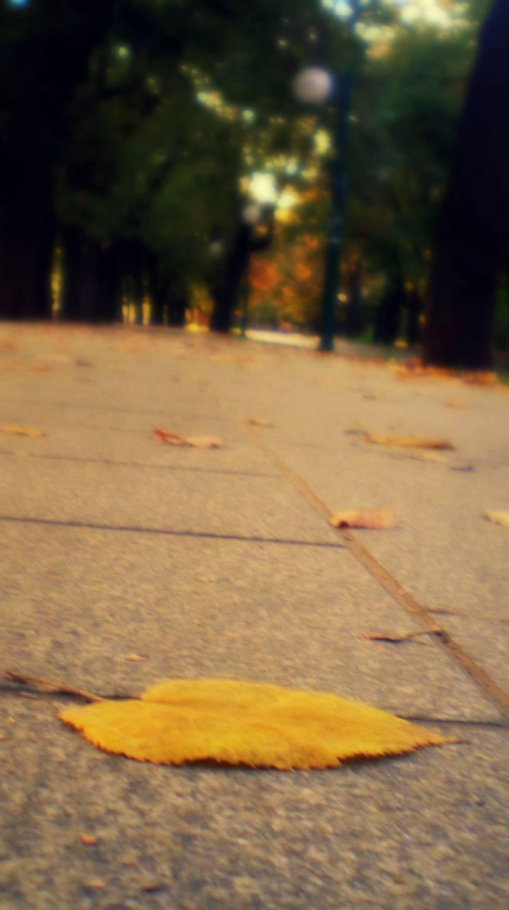 Autumn Leaf Hd