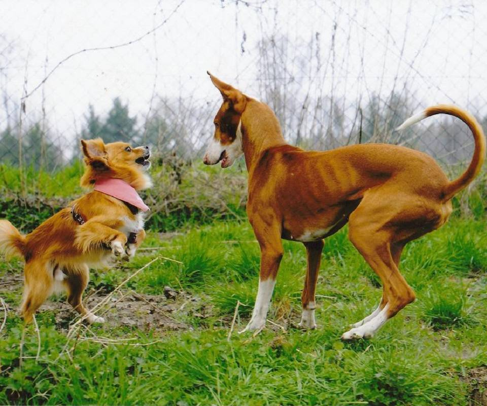 Dances with Dogs