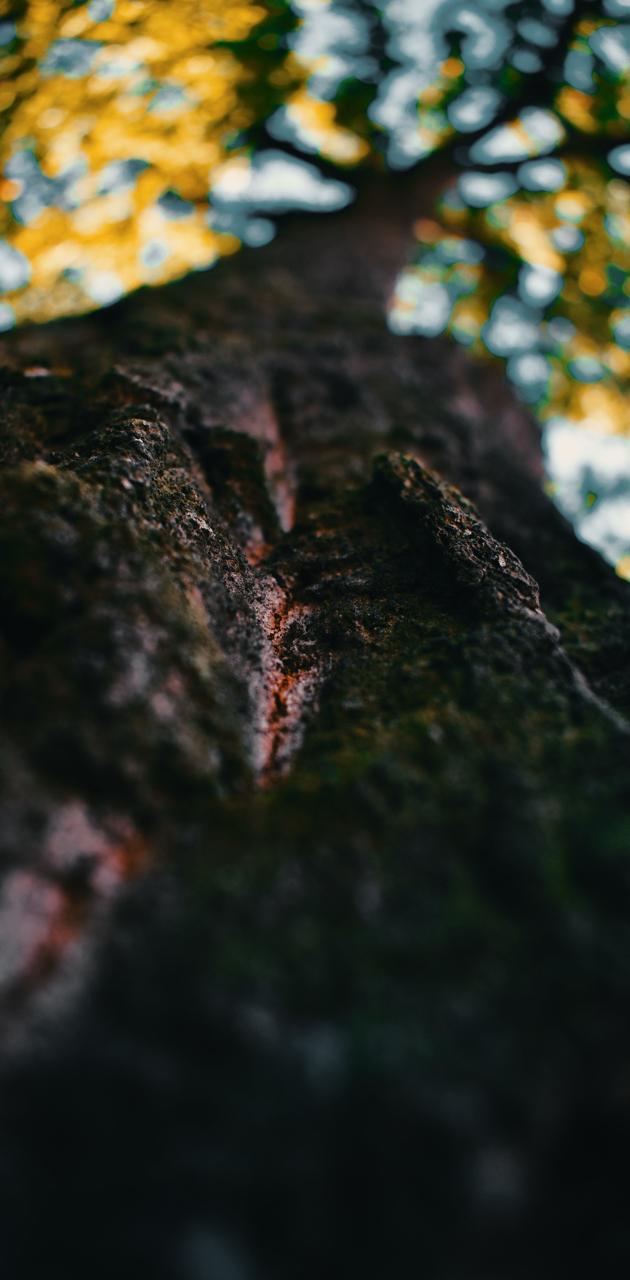 Autum tree