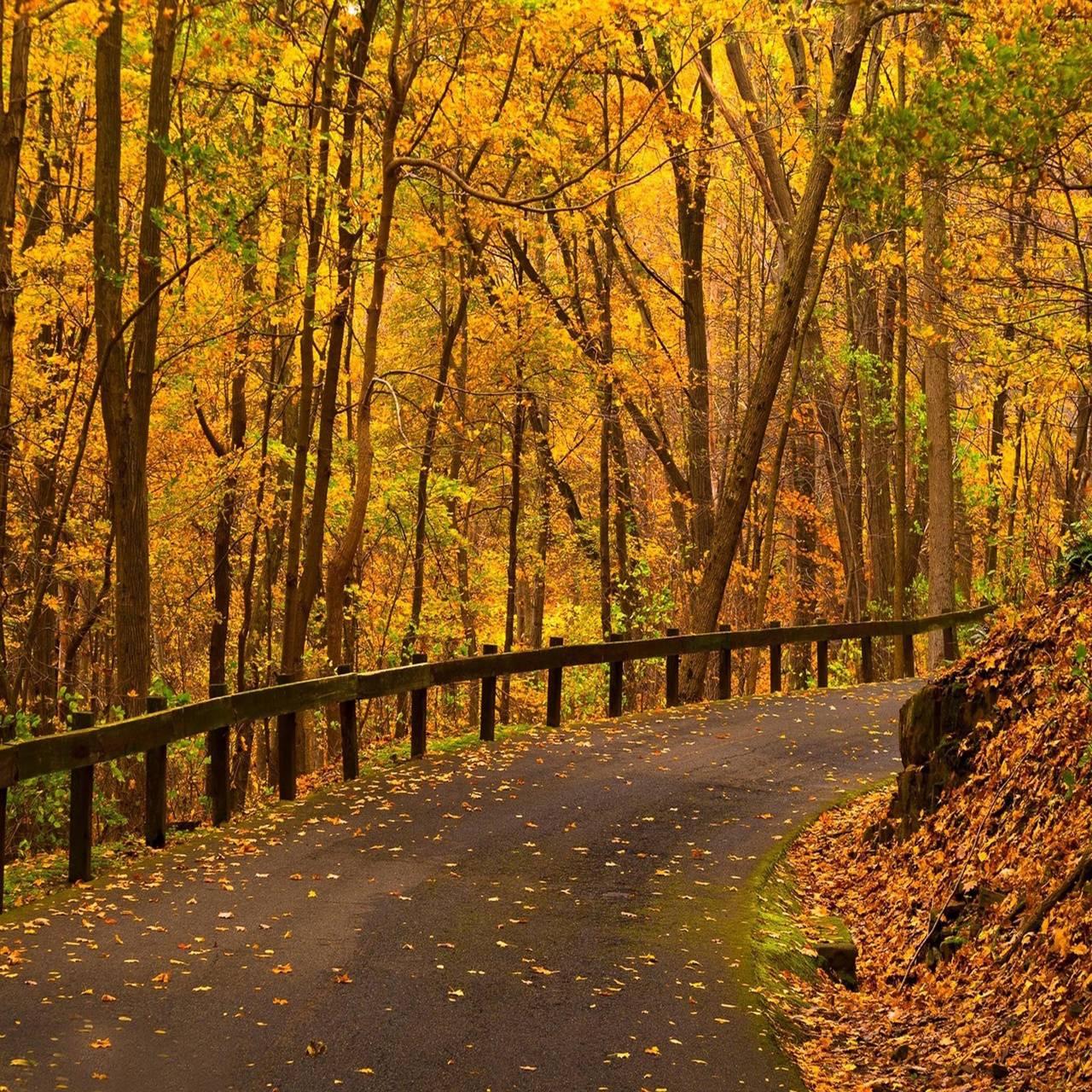 Leaves road autumn