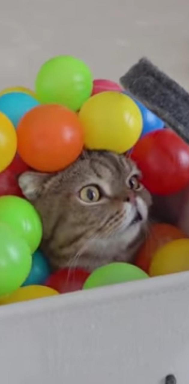 Bucket Kitty