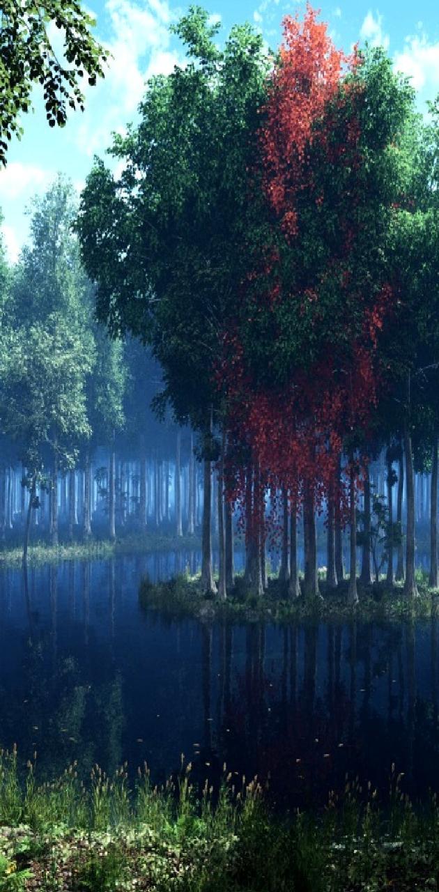 nature------------