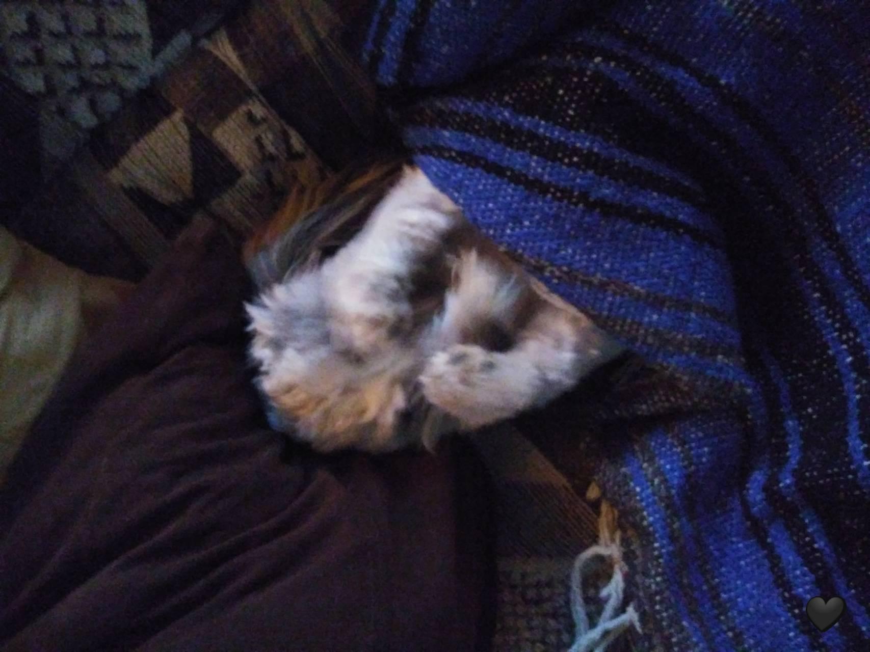 Clancy human doggo