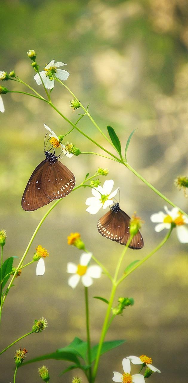 Lonely butterflies