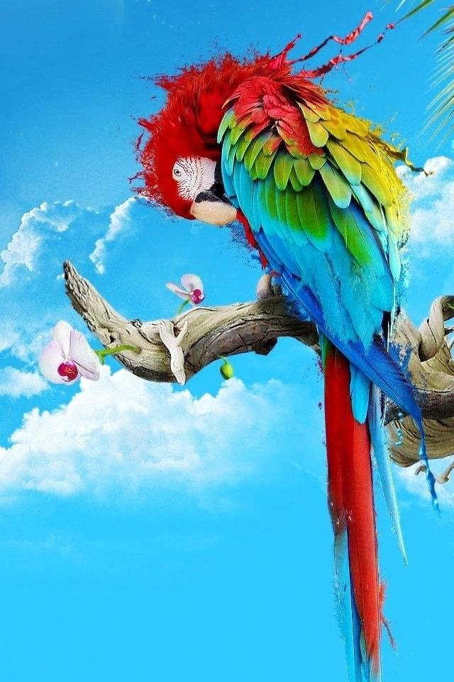 Sweet Parrot