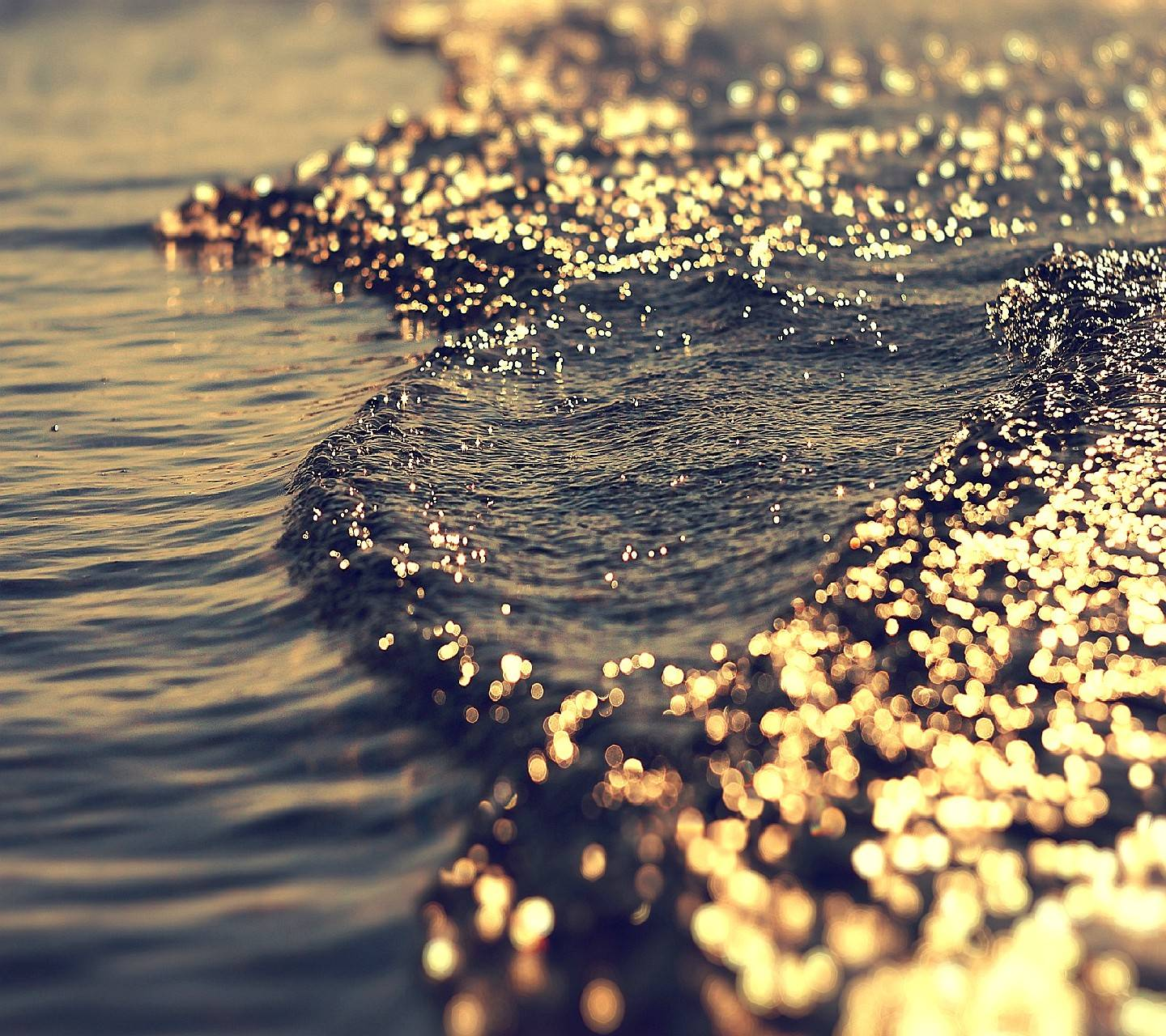 gold nor sea-------