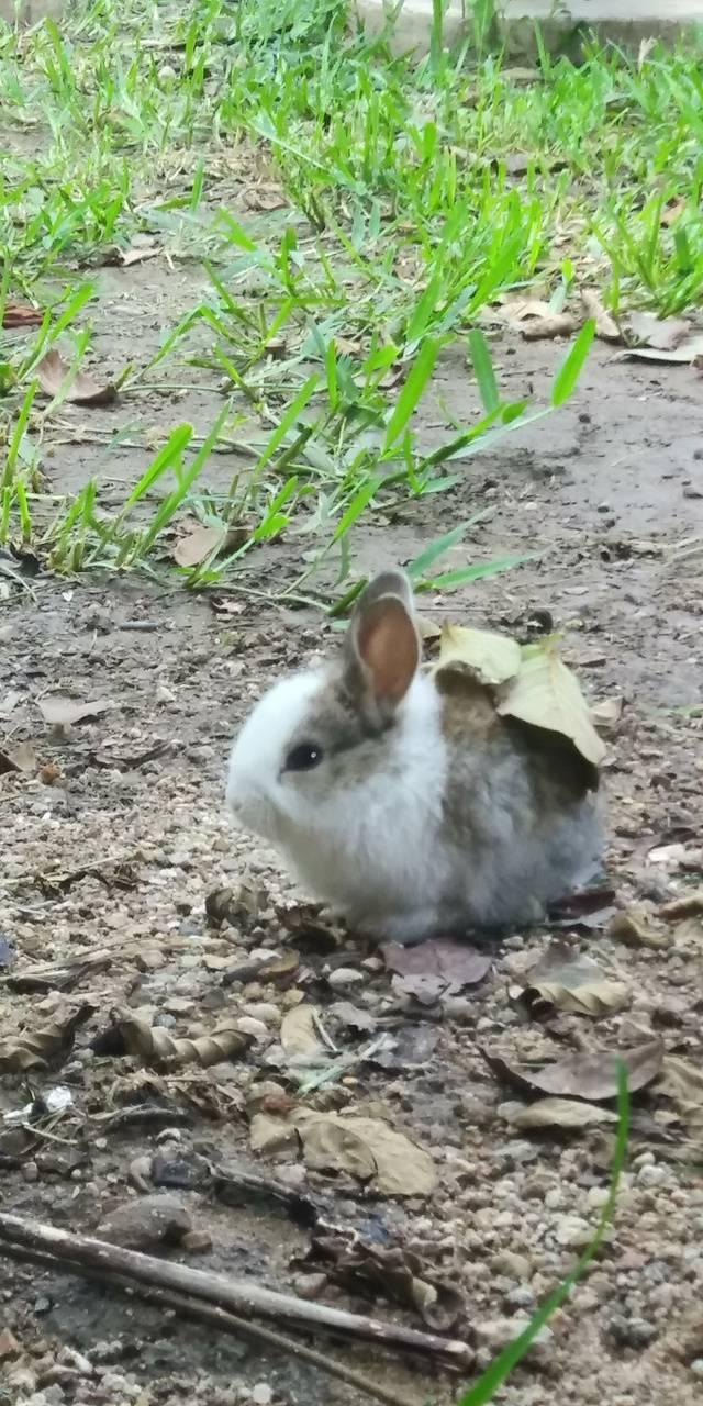 Vertical bunny