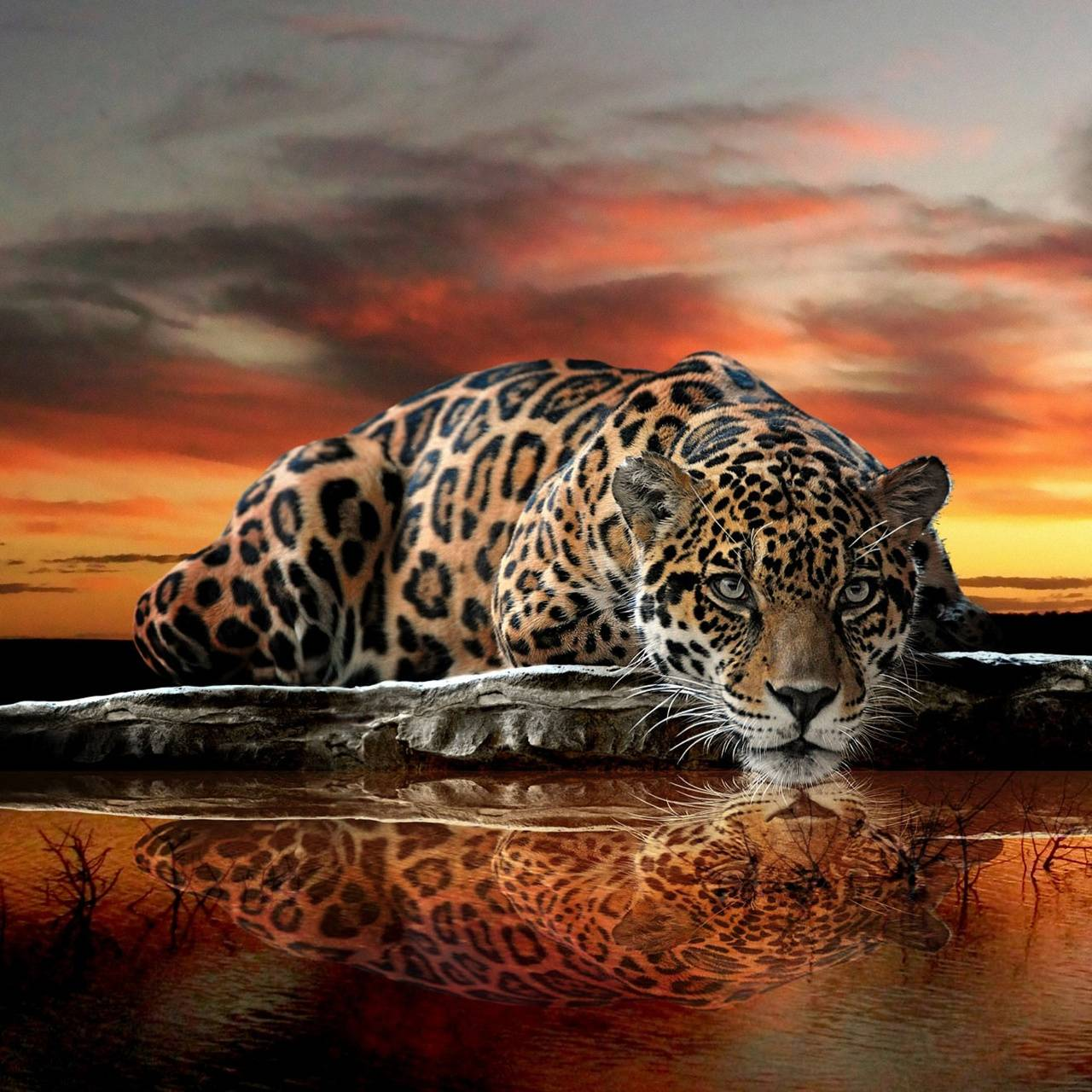 Abstract Jaguar Wallpaper By Dudeski1988