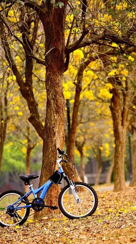 Bicycle Leaves
