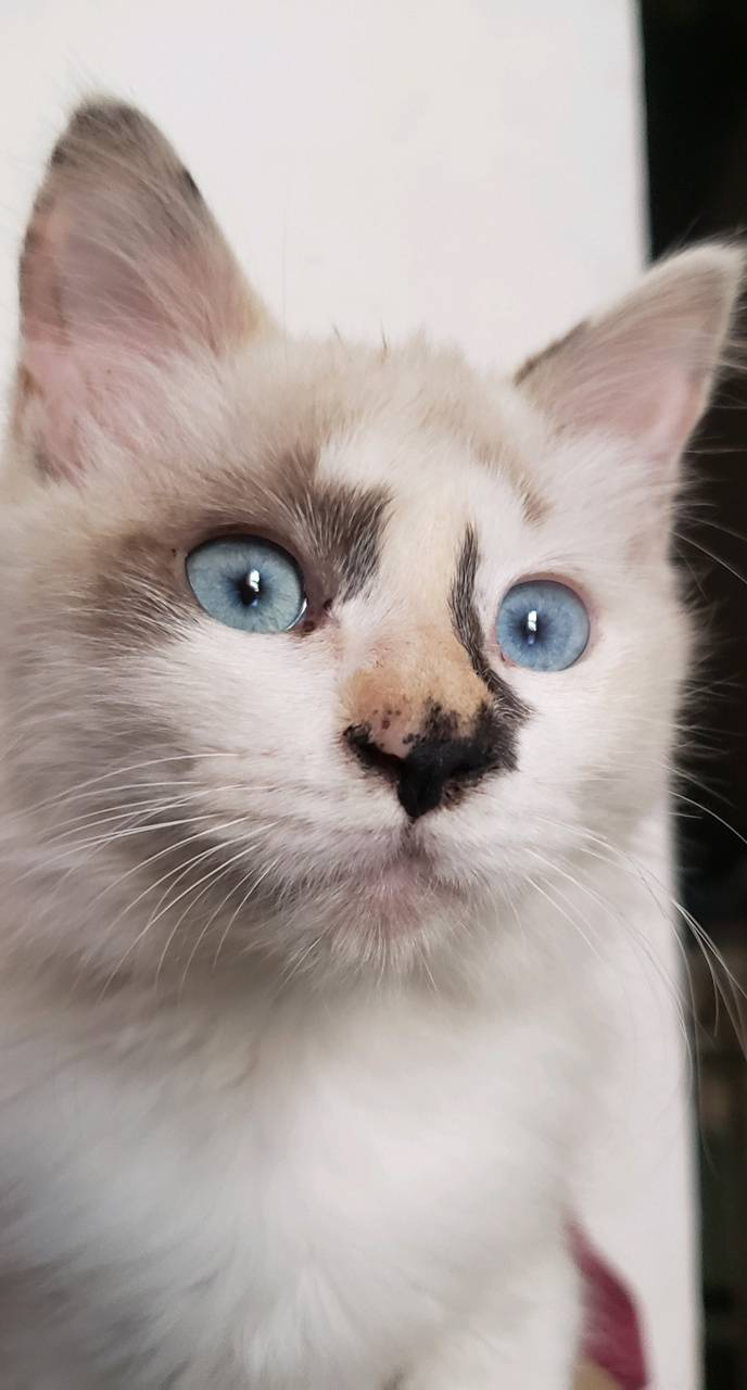 Cat eyes Blue