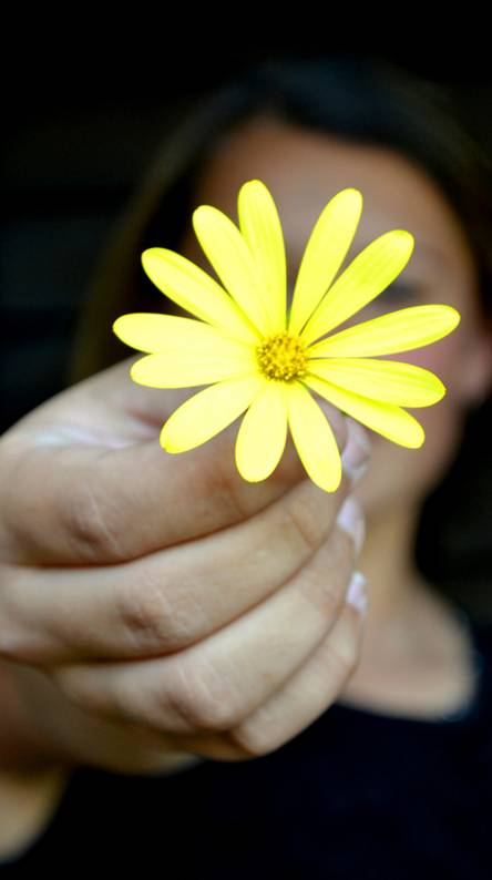 Flower Yellow 20