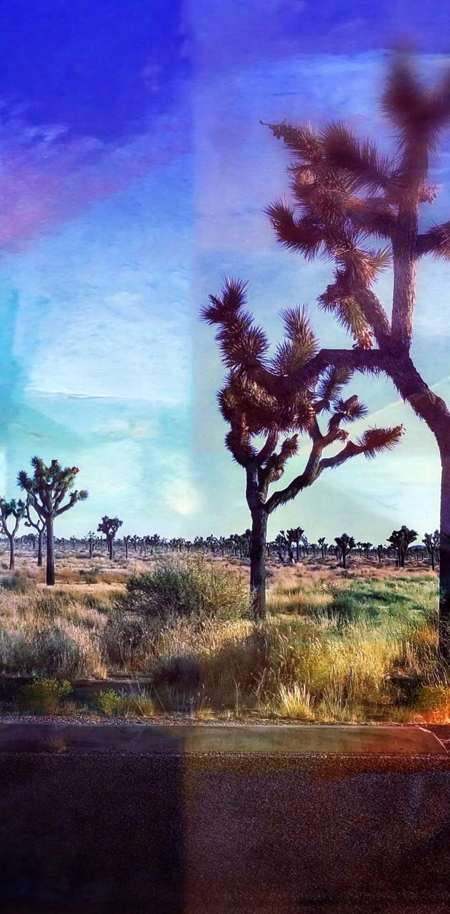 Acid Yucca
