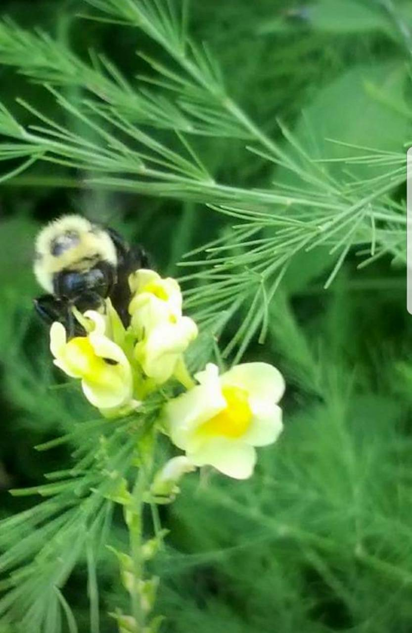 Snappy Bumble Bee 2