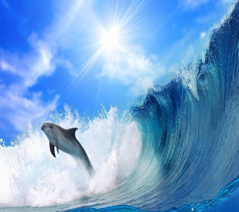 Delfine Underwater