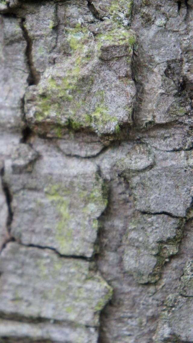 cracked stones