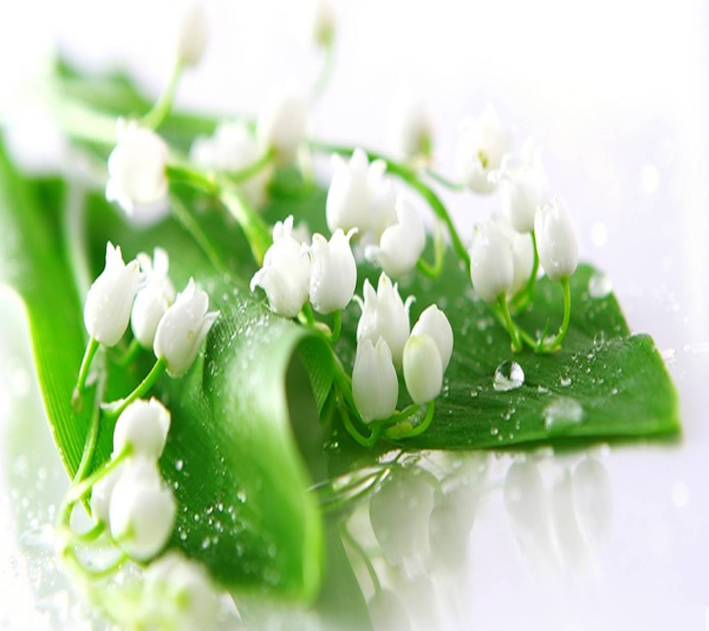 Lily Of The Valley Wallpaper By Venus 26 Free On Zedge
