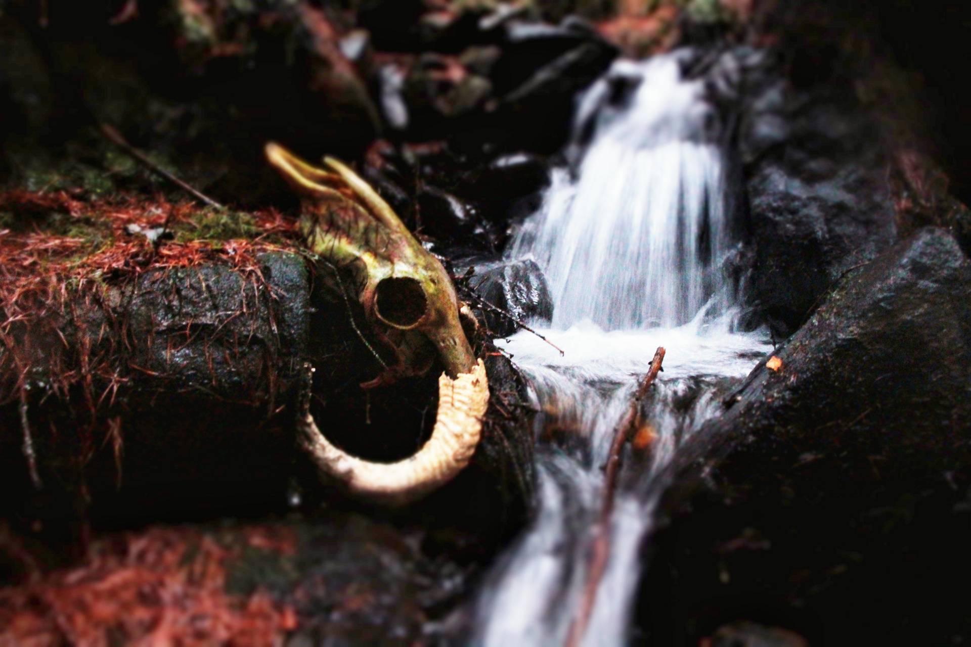 Waterfall skull