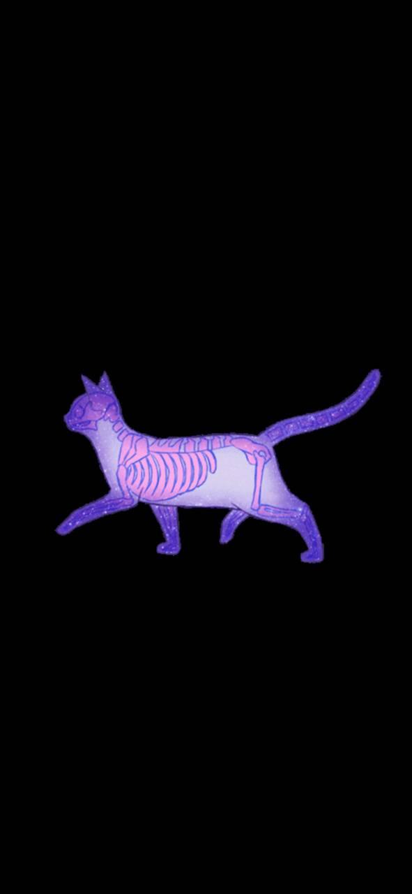Skeleton cat pastel