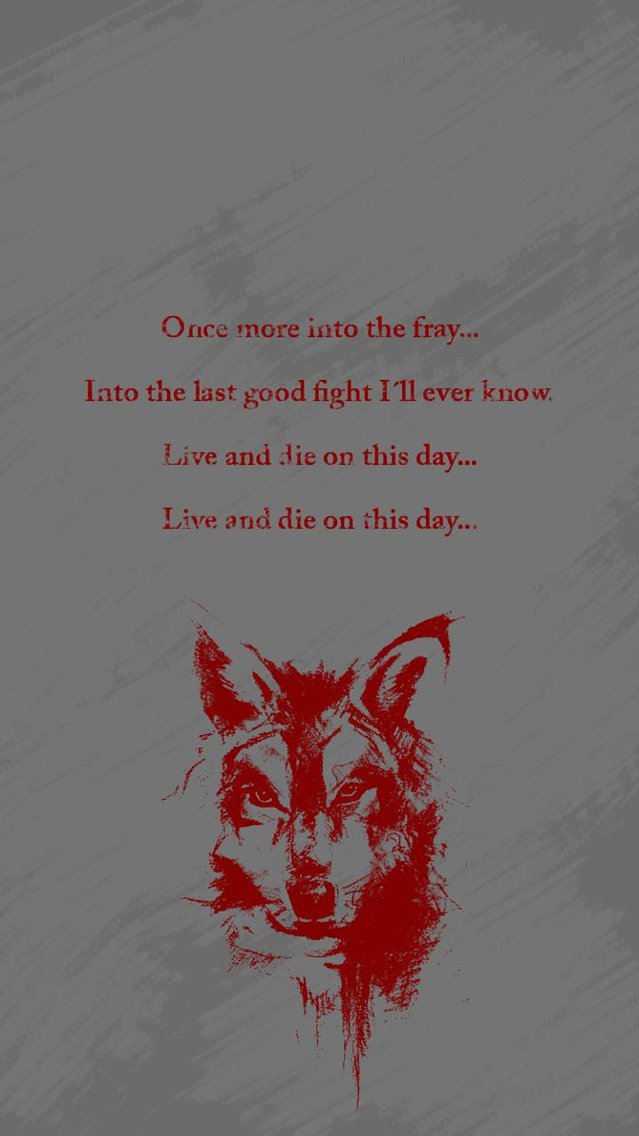The grey - Wolf