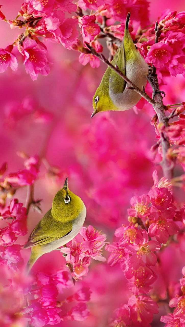 Love Birds Wallpaper By Georgekev Bb Free On Zedge